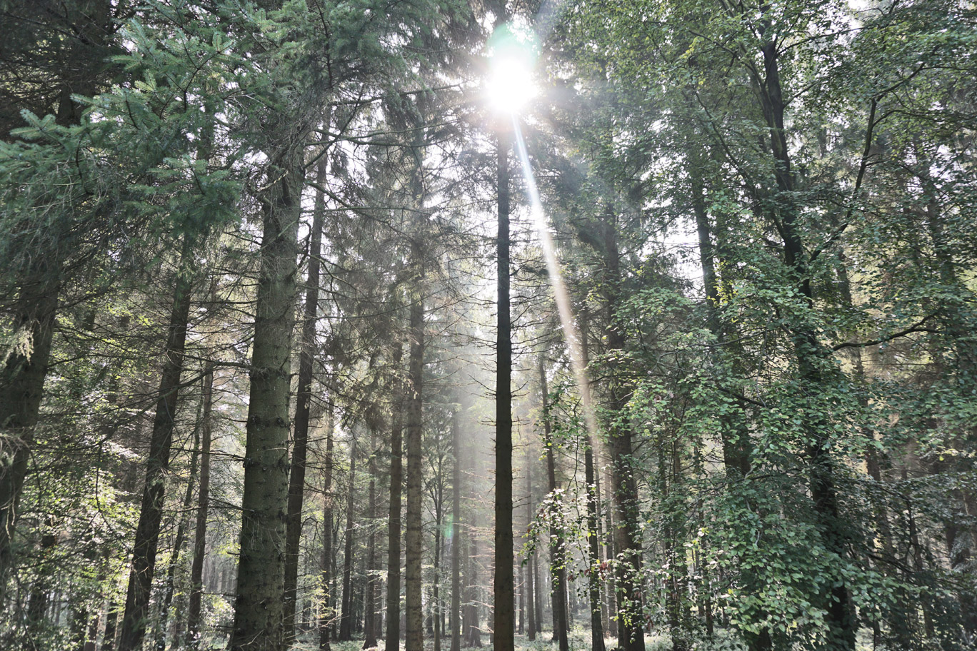 Light shining through the trees in a forest