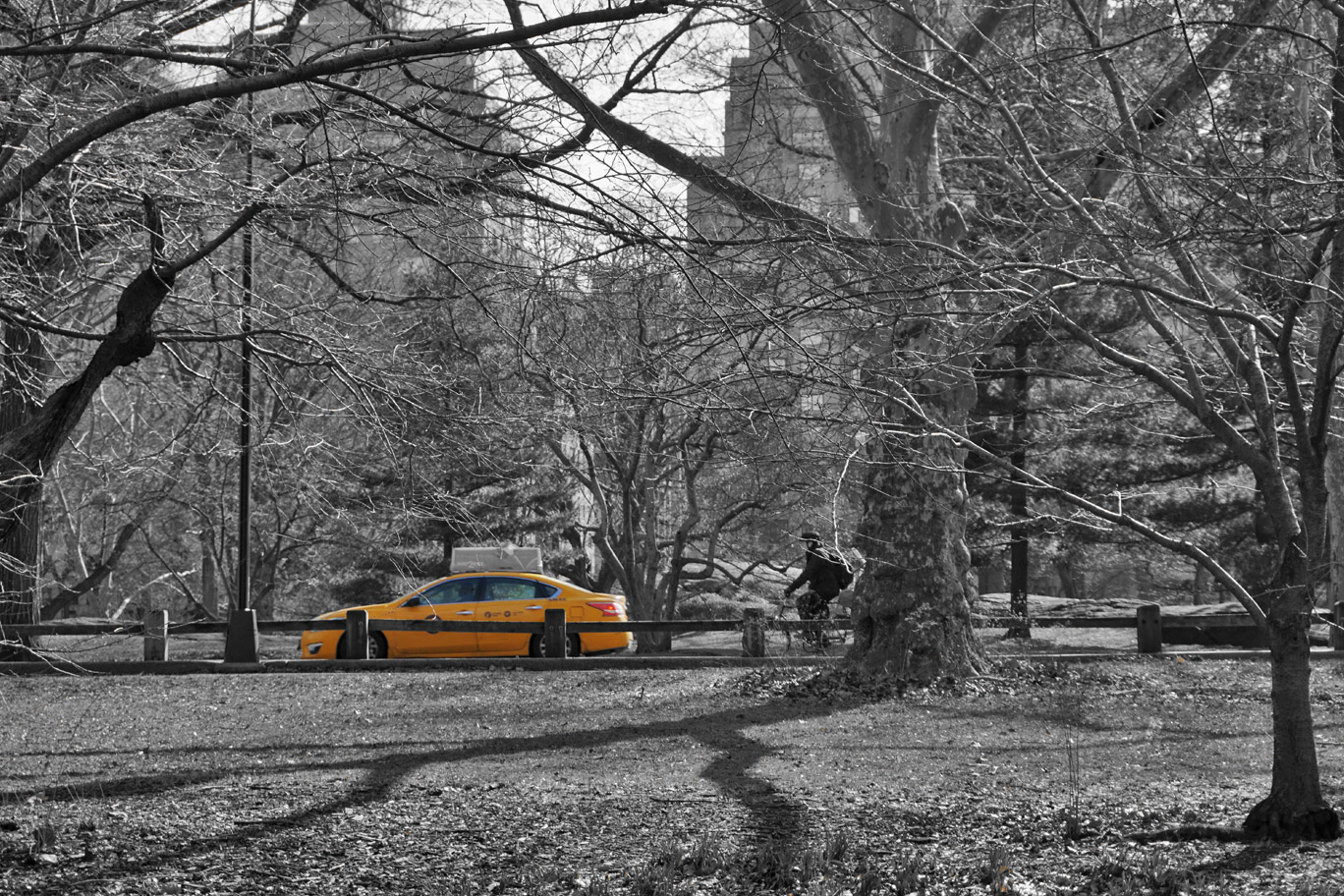 Yellow cab in Central Park